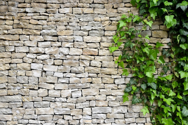 Vieux mur de pierre avec du lierre en arrière-plan.