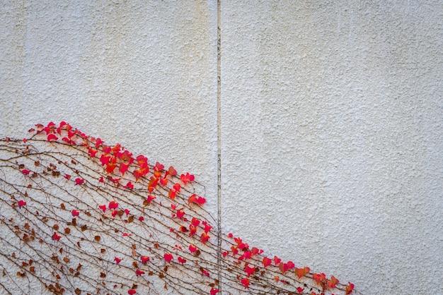 Vieux mur de pierre avec des feuilles rouges.