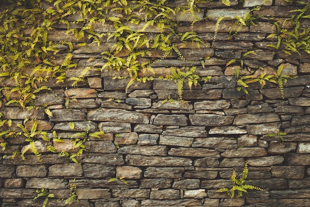 Vieux mur de pierre marron foncé composé de briques massives et tressé de plantes grimpantes géométriques