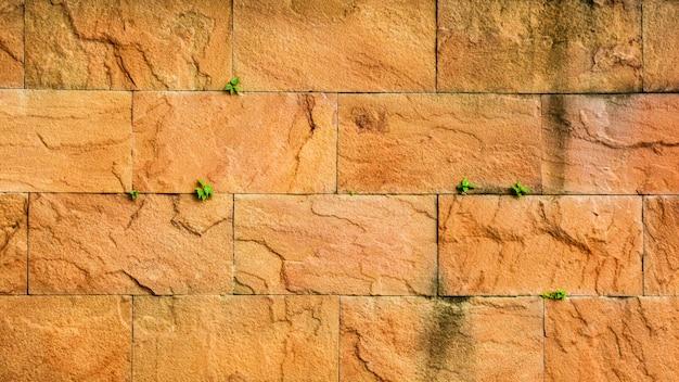 Vieux mur de pierre et une petite plante.