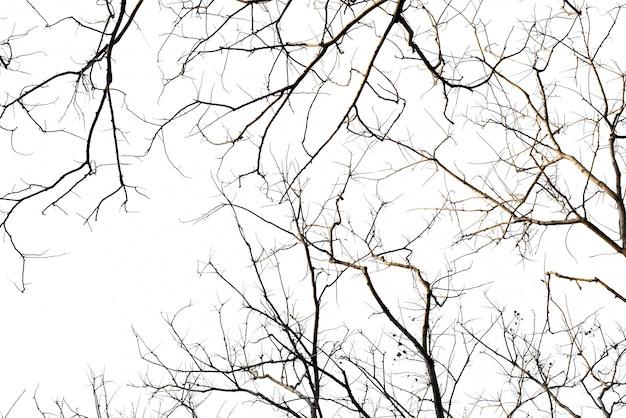 Vieux noir d'une branche libre