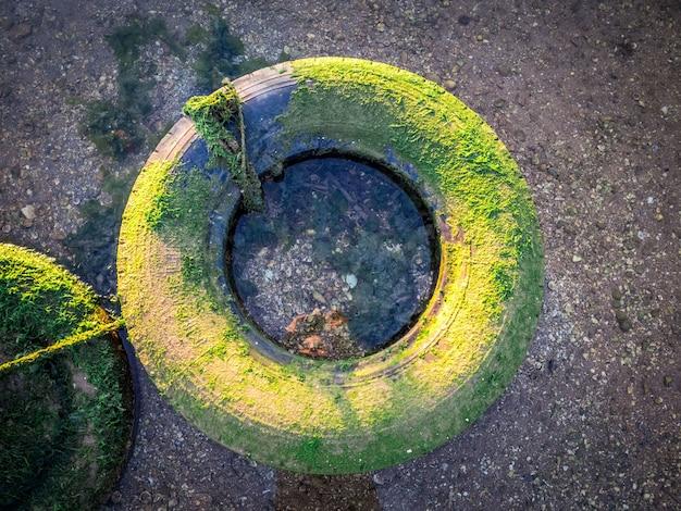 Vieux pneu patiné recouvert de mousse sur le sable pendant la journée