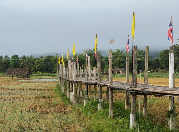 Vieux pont de bambou passer champ de riz dans la vue du matin