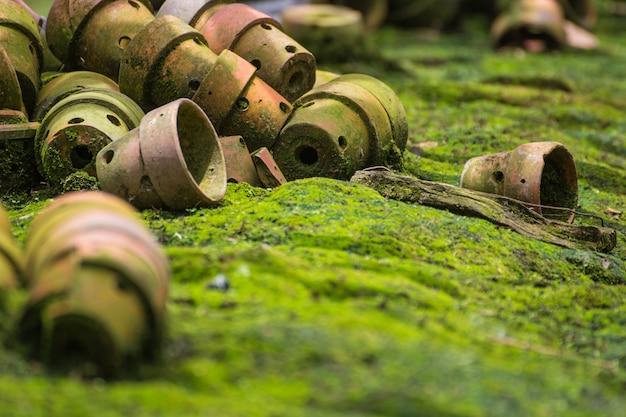 Vieux pots d'arbres sur le sol dans le jardin.