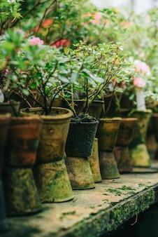 Vieux pots de fleurs en argile recouverts de mousse se tiennent en ligne en serre