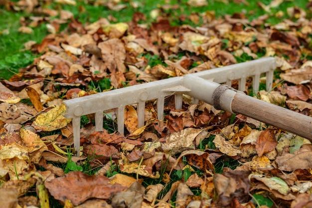 Un vieux râteau en plastique avec un manche en bois repose sur une pelouse d'herbe verte parsemée de feuilles d'automne jaunies et fanées.