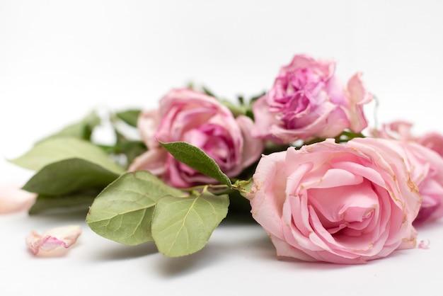 Vieux roses fanées gros plan sur un blanc pour les cartes de conception