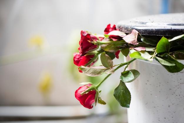 Vieux roses sur la poubelle