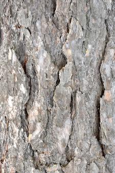 Vieux texture en bois pour le fond dans un style rustique.