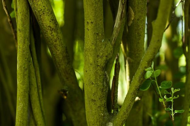 Vieux tronc d'arbre avec de nombreuses formes différentes modèle de texture