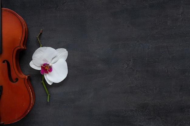 Vieux violon et fleur d'orchidée blanche. vue de dessus, gros plan sur fond de béton foncé