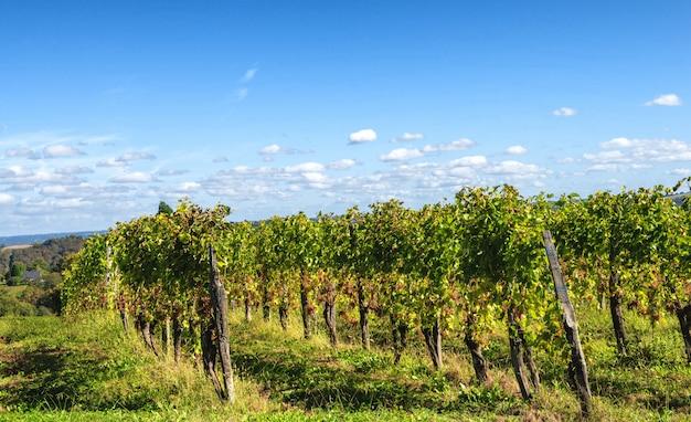 Vignoble du vin de jurançon dans les pyrénées françaises