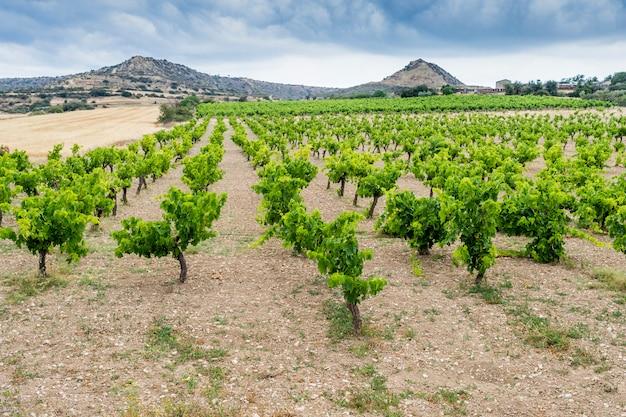 Vignoble à la montagne