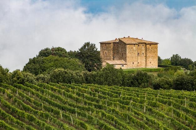 Vignoble près de montalcino, italie