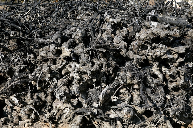 Vignoble séché vieilli empilé tronc bois