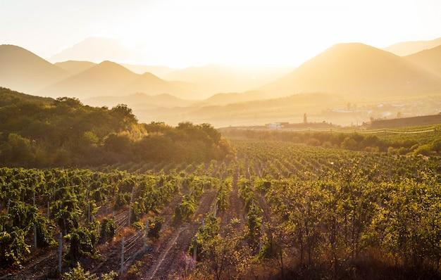 Les vignobles au coucher du soleil
