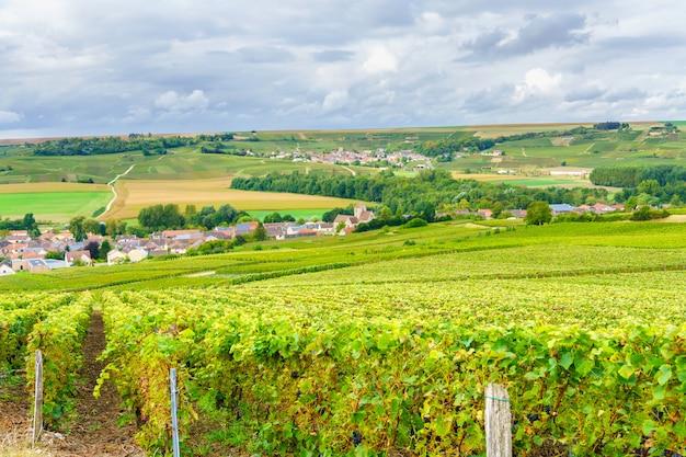Vignobles de champagne au coucher du soleil, montagne de reims, france