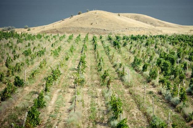 Vignobles en crimée