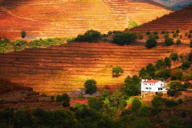 Vignobles dans la vallée du fleuve douro au portugal. région viticole portugaise. beau paysage d'automne