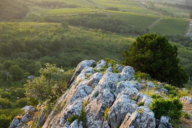 Vignobles dans une vallée de montagne. vue d'en-haut.