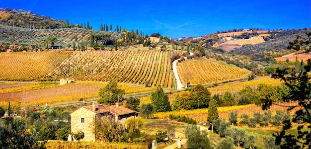 Vignobles dorés. beau paysage de la toscane aux couleurs d'automne. italie