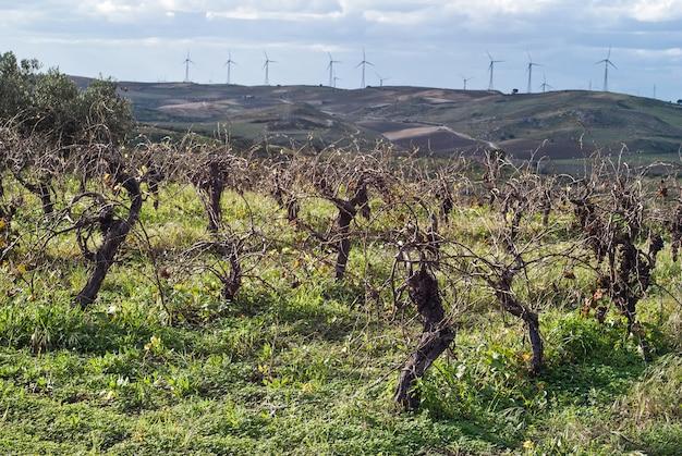 Vignobles en récolte invern