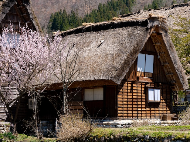 Village historique de shirakawa-go au printemps, japon