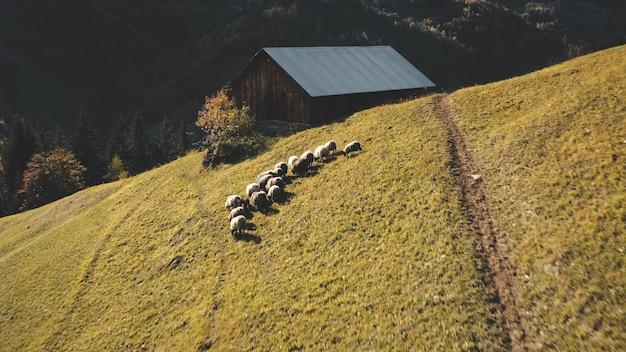 Village rural aux crêtes de montagne animaux de la ferme aérienne à la campagne nature paysage meules de foin à