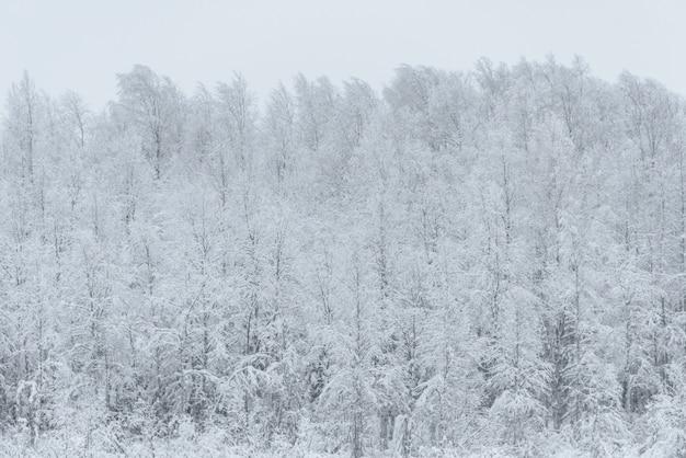 Le village de vacances kuukiuru, en finlande, est recouvert de neige épaisse et de ciel dégagé par mauvais temps en hiver.