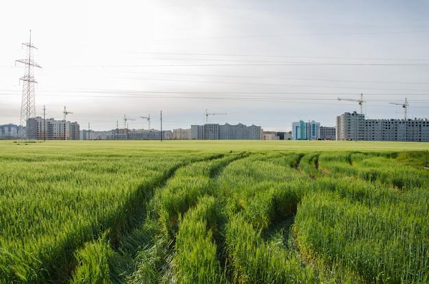 La ville est proche de la nature, les grues construisent des maisons