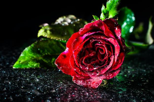 Vintage fond de roses rouges