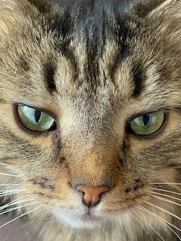 Visage de chat se bouchent