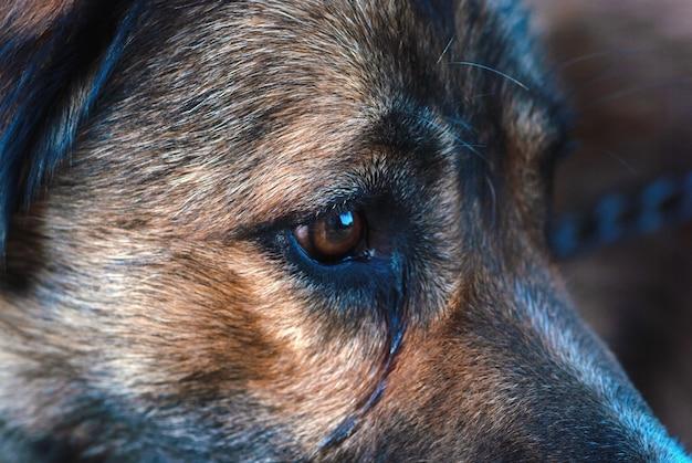 Visage de chien qui pleure triste bouchent