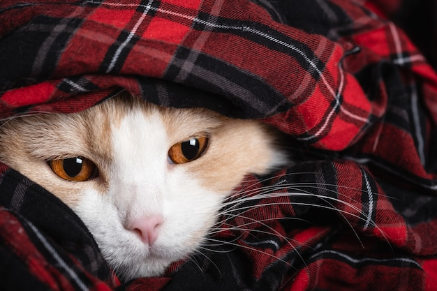 Visage drôle d'un chat endormi et paresseux froid.