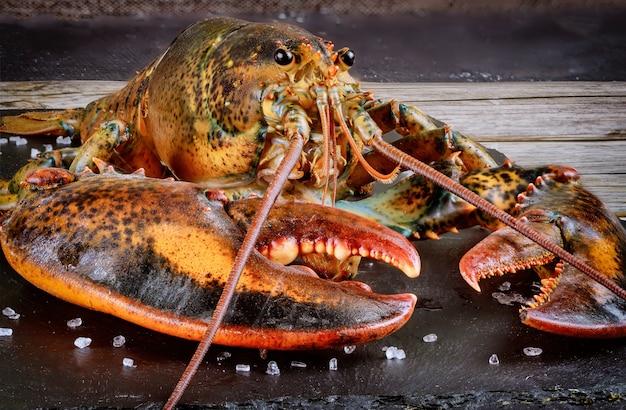 Visage et griffe de homard vivant avec détails. coup de macro.