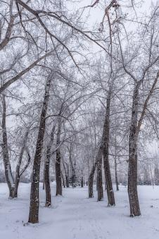 Une voie d'arbres couverts de givre