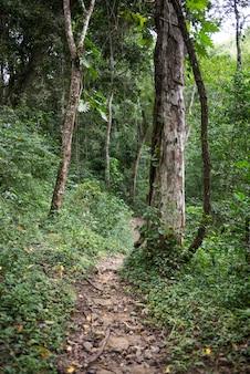 Voie et arbres dans la forêt tropicale, yelapa, jalisco, mexique
