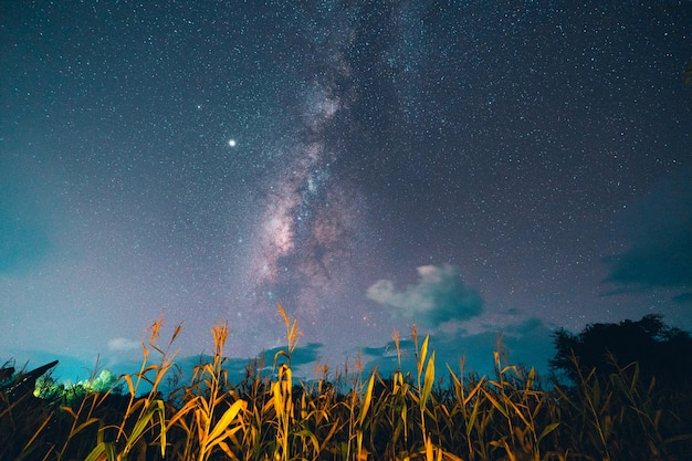 Voie lactée et étoiles de la nuit dans les champs ton d'ambiance