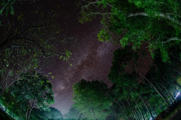 Voie lactée en forêt
