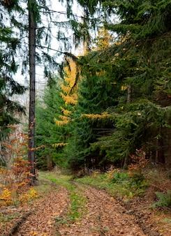 Voir dans une route d'automne dans la forêt mixte de conifères, pologne