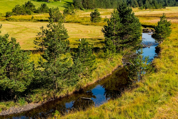 Voir à la rivière crni rzav sur la montagne zlatibor en serbie