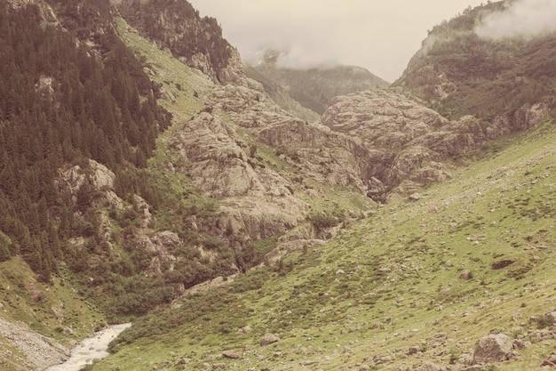 Voir des scènes de rivière en gros plan dans les montagnes, parc national suisse, europe. paysage d'été, temps ensoleillé et journée ensoleillée