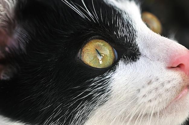 Voir, yeux de chat