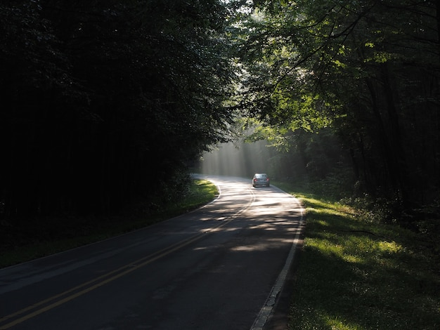 Voiture roulant à travers la route dans une forêt entourée d'arbres sous la lumière du soleil