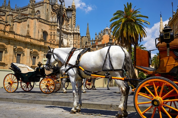 Voitures de cheval de séville dans la cathédrale de séville