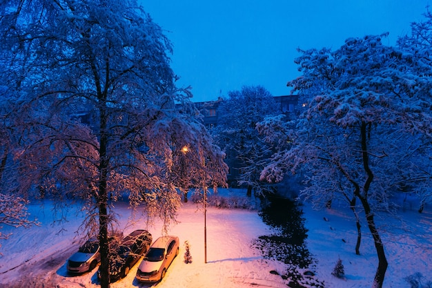 Voitures garées dans la cour sous l'arbre avec de la neige verglaçante autour