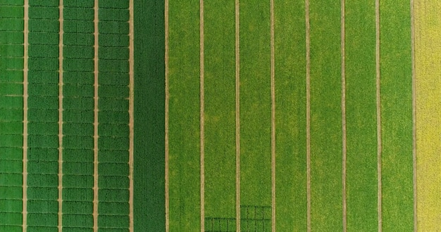 Vol aérien au-dessus des champs avec des bottes de paille au moment de la récolte. soja, tournesol et maïs ou maïs.