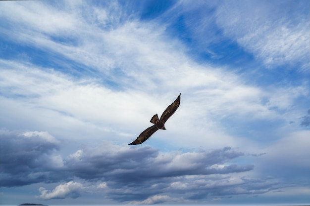 Vol d'aigle.