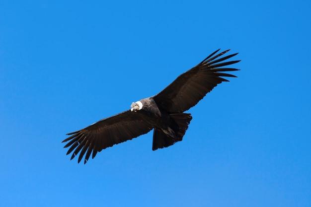 Vol condor