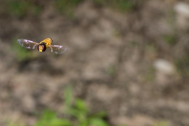 Vol d'insectes